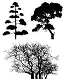 Three tree silhouettes on white Stock Photography