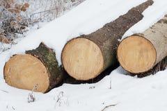 Three tree trunks stock images
