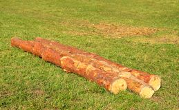 Three tree trunks on the green grass Royalty Free Stock Photography