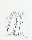 Three Trees. A simple ink drawing of three trees Stock Photos
