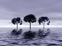 Three trees Stock Images