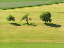 Three Trees. In an Austrian Landscape Royalty Free Stock Photos