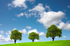 Three trees Royalty Free Stock Photos