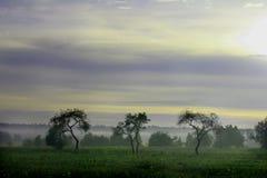 Three Trees Stock Photography