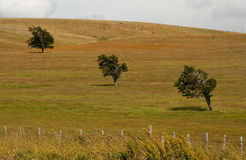 Three trees on a field Royalty Free Stock Photography