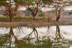 Three Trees Stock Image
