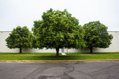 Three trees. Royalty Free Stock Images