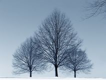 Three Trees. In winter - snow Royalty Free Stock Images