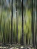 Three Trees Royalty Free Stock Photography