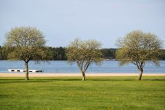 Three trees on a beach. On a spring day. Meadow with yellow flowers in foreground and sea in a background Royalty Free Stock Image