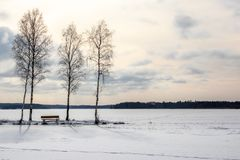 Three trees and a bech, beautiful afternoon late winter frozen lake landscape. Horizontal composition Royalty Free Stock Image
