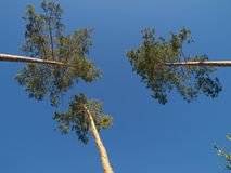 Three trees. On blue sky royalty free stock photos