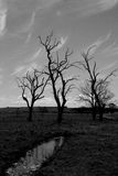 Three trees Stock Images