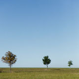 Three trees in countryside Royalty Free Stock Image