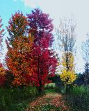 Tri colored stock photos