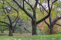 Three trees in fall Royalty Free Stock Photography