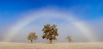 Three trees. Before the fog with rainbow Royalty Free Stock Photos