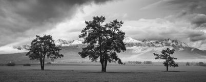 Three trees. In front of mountains Stock Photos