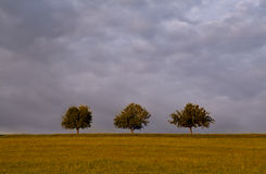Three trees on horizon Stock Photo