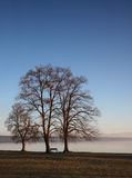 Three trees at the lake Stock Photos