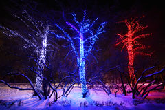 Three trees with many decorative lights Stock Photos
