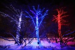 Three trees with many decorative lights. Three trees with many decorative blue, red and white lights at night in winter stock illustration
