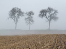 Three trees in the mist. Three trees on a misty morning in France Royalty Free Stock Photos