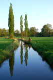 Three trees. Near a small river. They are located near the small village of Delden, in the region called Twente in the province of Overijssel, The Netherlands Royalty Free Stock Photo