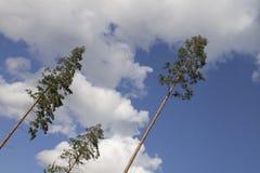 Three trees. Stock Photo