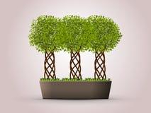 Three trees in a pot Royalty Free Stock Photo
