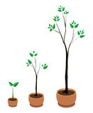 Three trees in pots. Vector illustration vector illustration