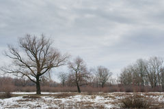 Three trees at the snowy field Stock Images