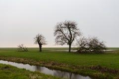 Three trees sorted by size break the horizon Royalty Free Stock Photos