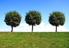 Three trees Royalty Free Stock Photo