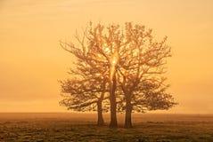 Three trees Royalty Free Stock Photos