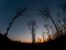 Three trees at sunset. Wide angle shot of three trees leaning to each other with sunset in the beackground Royalty Free Stock Images