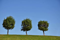 Three trees on the top of the hill.  Royalty Free Stock Photography