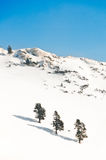 Three trees on a white mountain in winter. Three trees on an alpine mountain covered in snow Royalty Free Stock Image