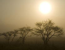 Three Trees With Sun Stock Image