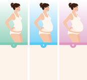 Three trimesters of pregnancy. Young woman in the three stages of pregnancy Royalty Free Stock Photo