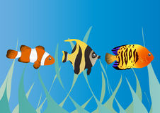 Three tropical fishes Royalty Free Stock Photo