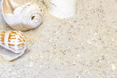 Three tropical shells on sandy beach vacation background Royalty Free Stock Photo