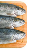 Three trout fish  on white background Stock Photo