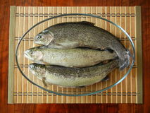 Three trout fishes in a glass bowl Stock Photos