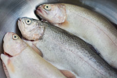 Three trouts Stock Photos
