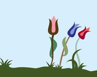 Three tulips. In different color on land Stock Image