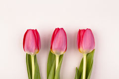 Three tulips Royalty Free Stock Photos