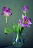 Three tulips. Bouquet of tulips in a vase Royalty Free Stock Photos