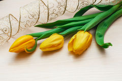 Three tulips and beautiful delicate ribbon Royalty Free Stock Photos