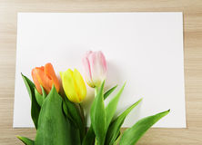 Three tulips of different colors on a sheet of paper Royalty Free Stock Photography